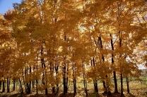Золотой октябрь.