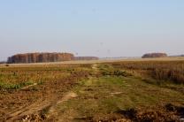 Грачи наедаются на экополях перед тем, как улететь в южные края.