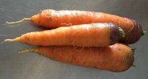 Морковь сорт Нантская, Марлинка