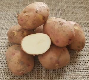 Картофель ранний БИО