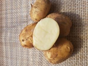 Картофель ранний БИО сорт Метеор.