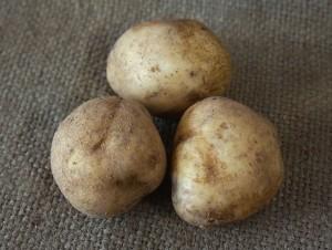 Картофель сорт Голубизна БИО в конверсии