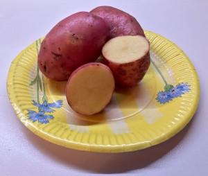 Картофель сорт Ред Скарлет
