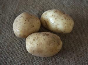 Картофель ранний сорт Удача БИО