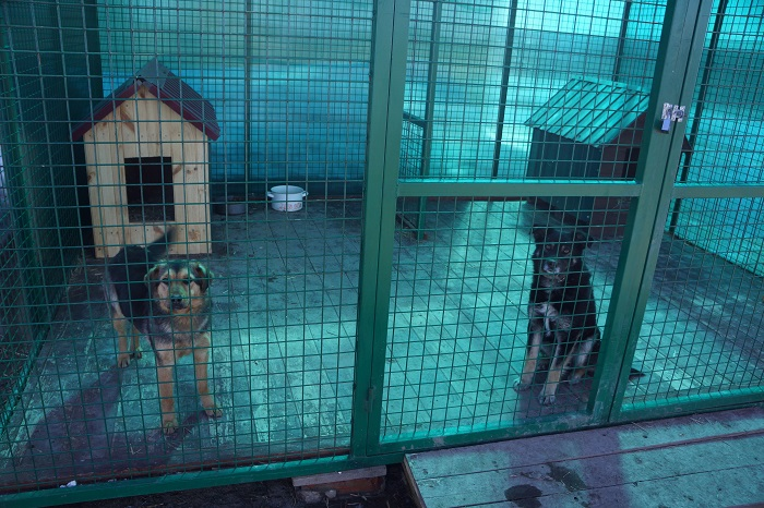 Рекс и Бася